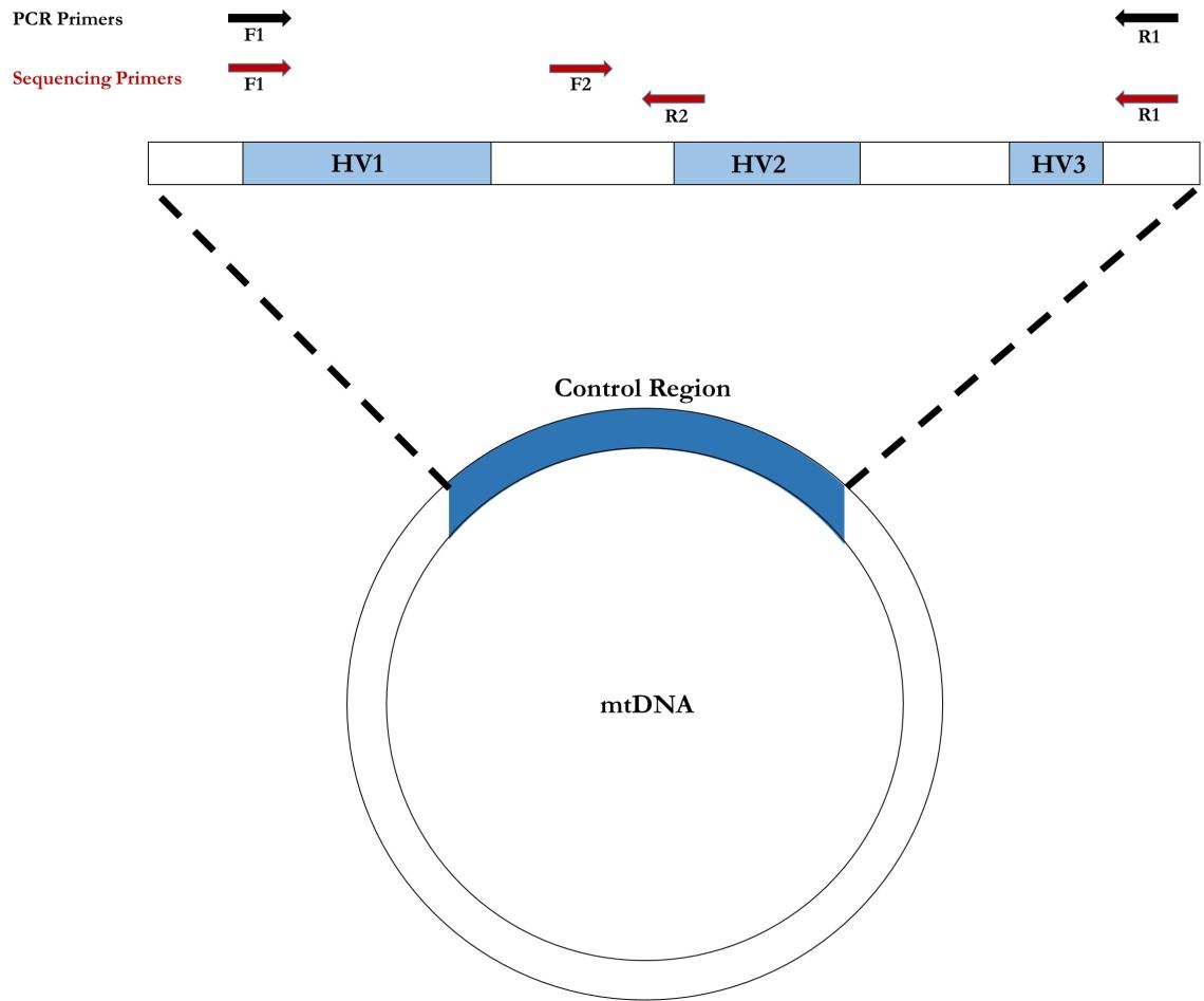 mtDNA (7)
